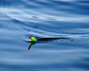 【初心者】ヒラマサルアー釣りの始め方を5ステップで解説【外房】