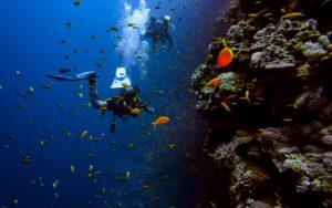【ダイビング】まずはここから!オープンウォーターライセンスを取得する方法