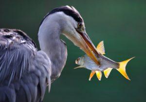 渓流ルアー釣れない理由と対策【具体例5つ】