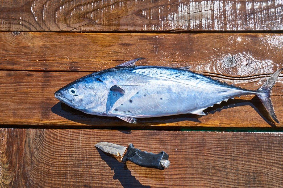 釣った魚を美味しく食べる