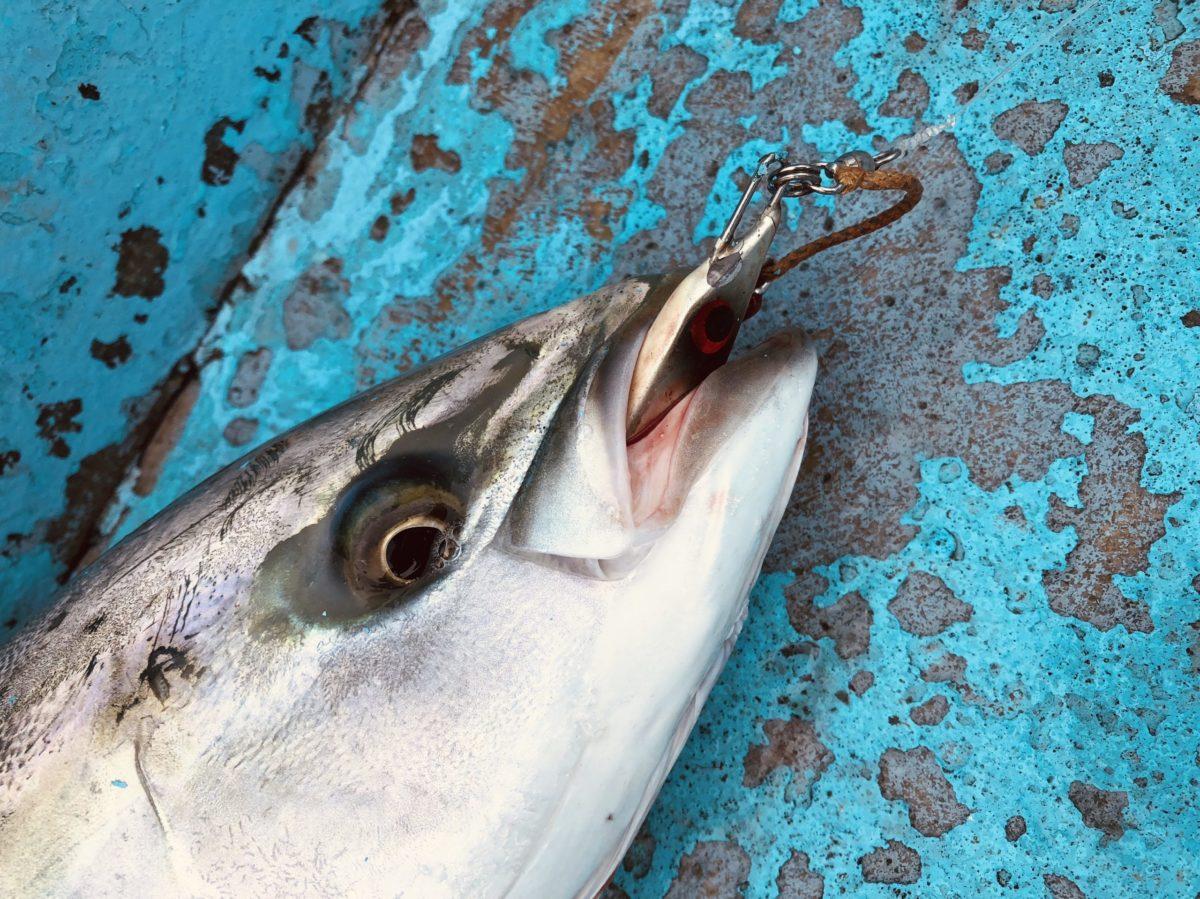 ジギング釣れる魚まとめ